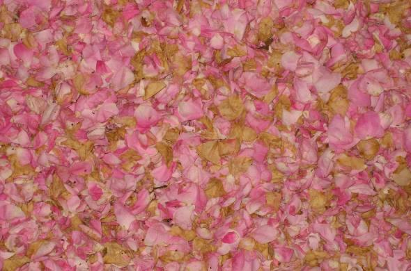 Rosenblüten-Blätter